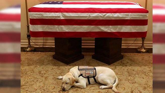 Sully, il cane di Bush davanti alla sua bara (Instagram)