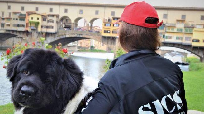 Un cane della Sics Scuola italiana cani di salvataggio