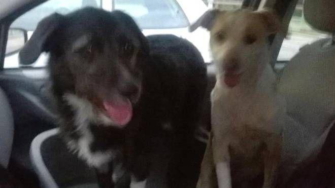 Cani avvelenati a Poviglio: Kira e Maya sono stati salvati
