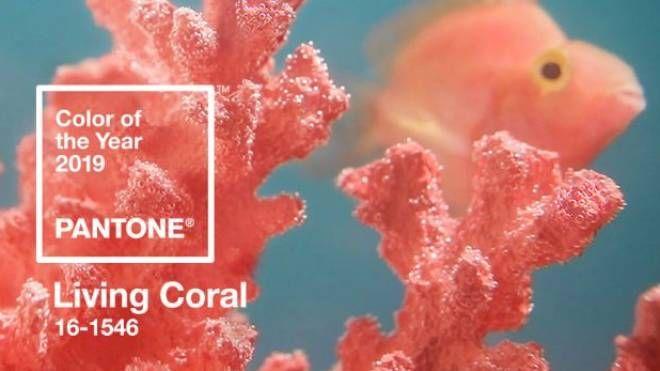 Living Coral, colore dell'anno 2019