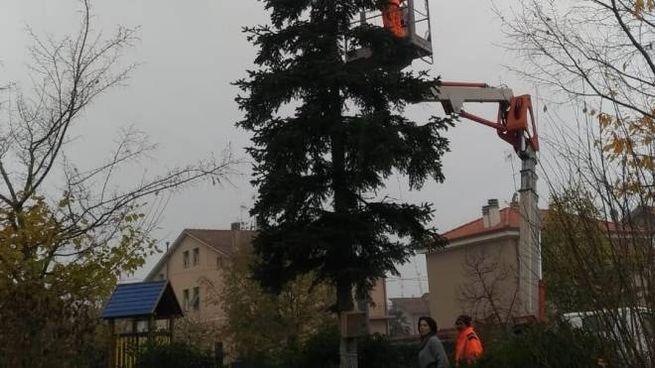Pesaro, gli addetti ai lavori hanno installato le luci sull'albero di Natale