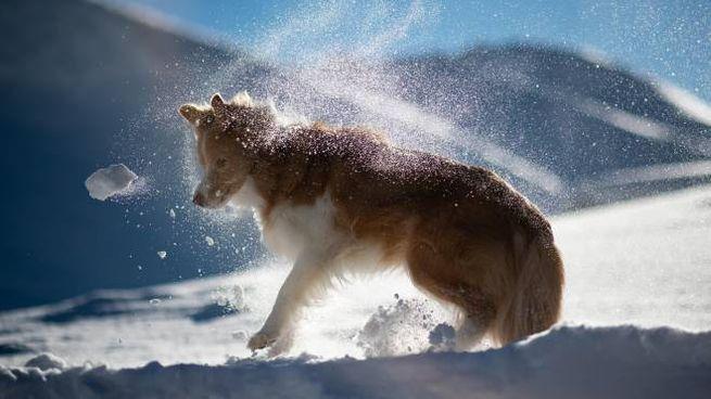 Un cane tra la neve (Ansa)