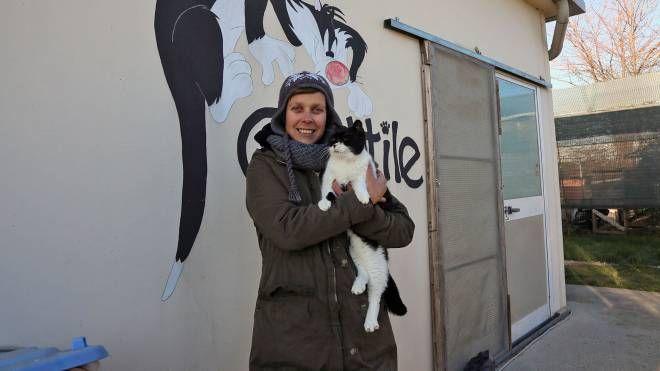 Una volontaria del gattile di Imola (foto Isolapress)