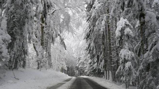 Neve, Germania sepolta. Meteo Italia, nuovo blitz artico (foto Ansa)
