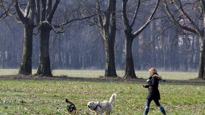 Cani lasciati senza guinzaglio (foto di repertorio)