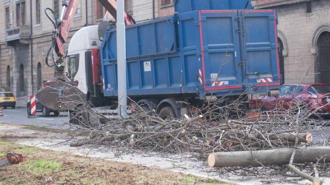 L'abbattimento degli ippocastani in viale Panzacchi (foto Schicchi)