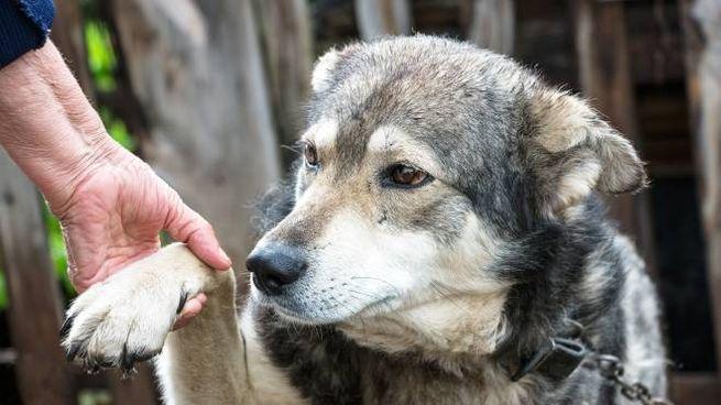 Cane anziano dà la zampa a una signora anziana