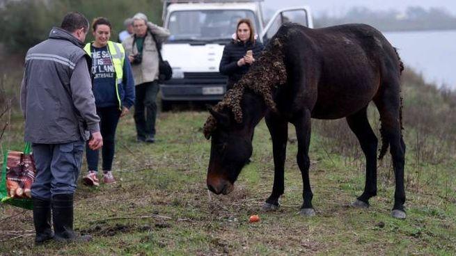 I volontari con i cavalli a Valle Lepri (Businesspress)