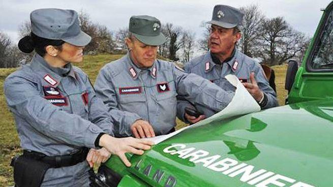 Carabinieri forestali, operazione anti-bracconaggio