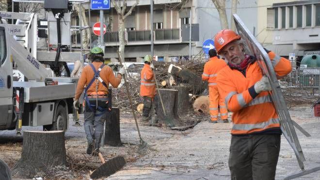 Taglio alberi viale Montegrappa