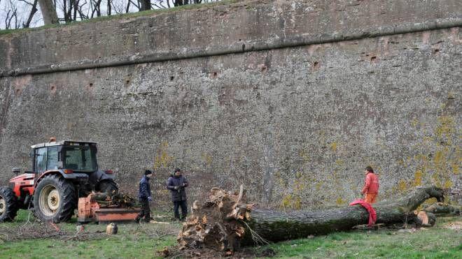 Lucca, albero caduto dalle mura