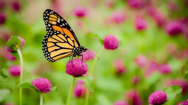 Bisogna per forza preservare gli insetti