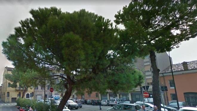 I pini marittimi di piazza Verdi sono stati abbattuti: saranno rimpiazzati da nuovi alberi