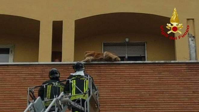 Cane bloccato su un parapetto al quarto piano