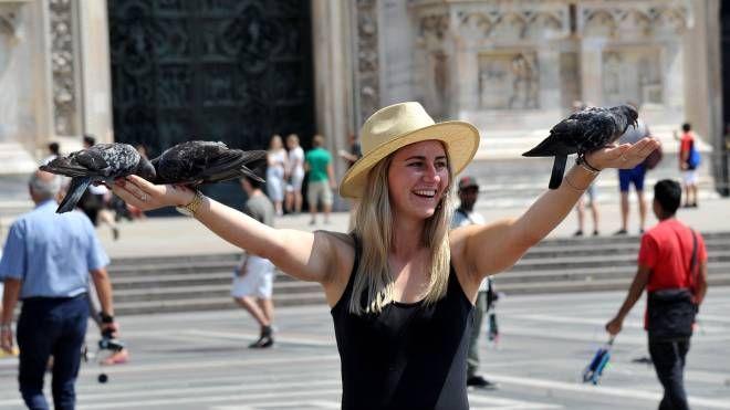 I piccioni sporcano Pontremoli ma anche piazza del Duomo a Milano e San Marco a Venezia
