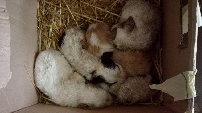 I cuccioli abbandonati in una scatola da un anziano di 80 anni