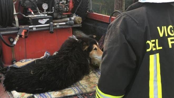 Cane cade nel fiume, salvato dai vigili del fuoco
