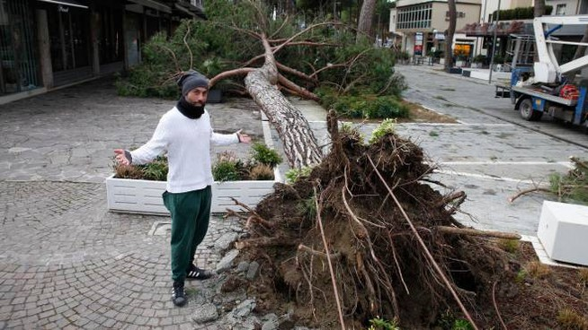 Uno pino caduto in pieno centro a Milano Marittima (foto Corelli)