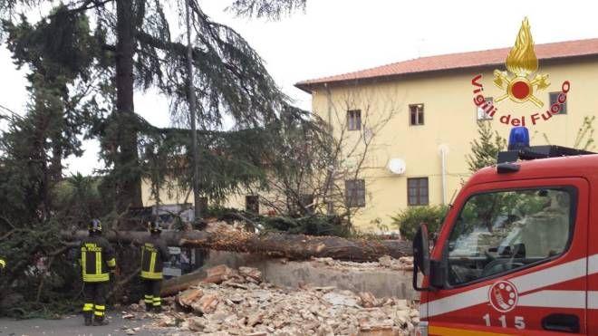 L'albero che ha abbattuto un muro di recinzione (foto: vigili del fuoco)