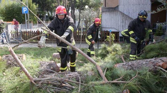 Decine gli interventi dei vigili del fuoco per rami e alberi caduti (foto Ravaglia)