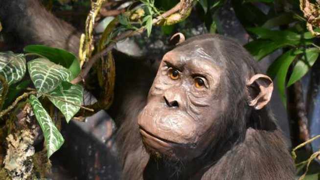 La Galleria dei Primati a Calci
