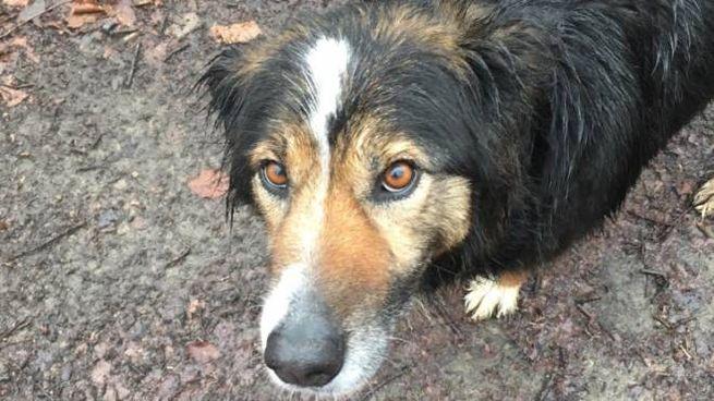 La cagnolina Siria si è smarrita a Firenze