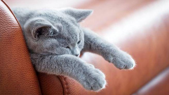 I gatti capiscono, ma ci ignorano