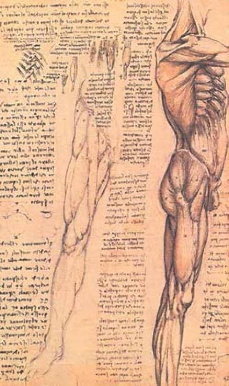 L'armonia del corpo stesso come oggetto visivo