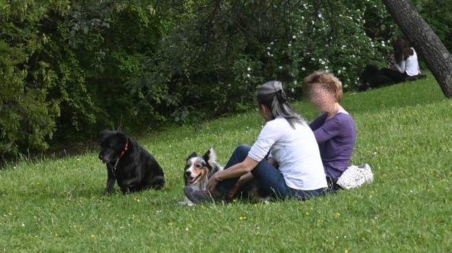 Bologna Azzannato Da Un Rottweiler Per Salvare Il Suo Cane
