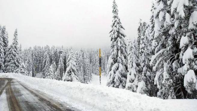 Meteo, la neve al Passo Rolle in Trentino Alto Adige il 29 aprile (foto Ansa)