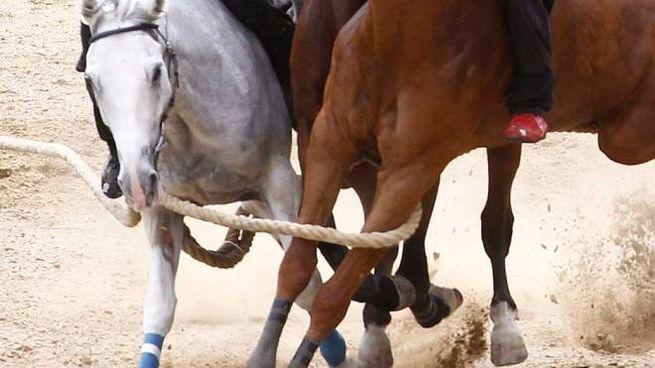 Quarta corsa: il canape fa il laccio a Veranu e Uragano (Foto Di Pietro)
