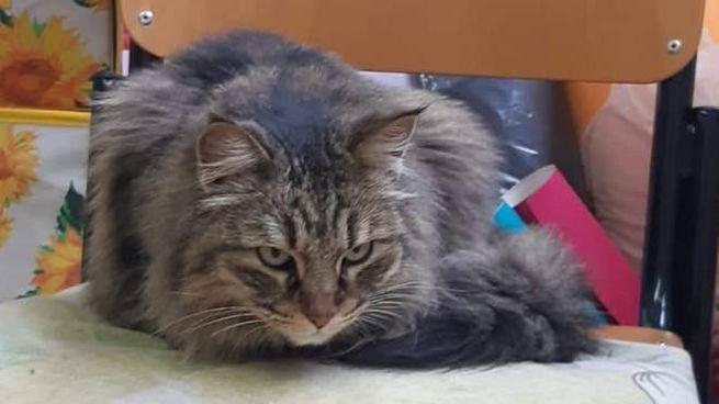 Viareggio, la gattina buttata dalla finestra a scuola