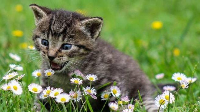 Crudeltà inaudita contro un gatto
