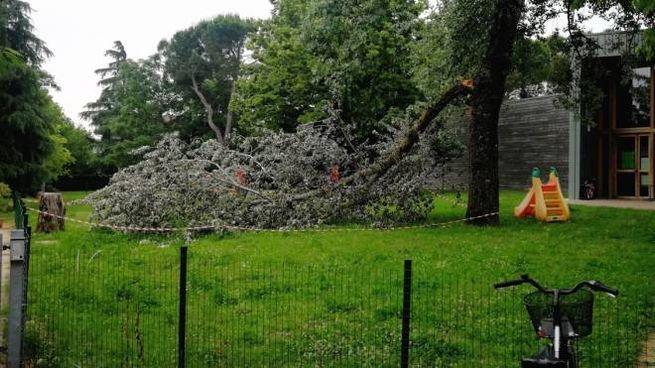 Il grosso ramo caduto nel giardino delle Gasparetto