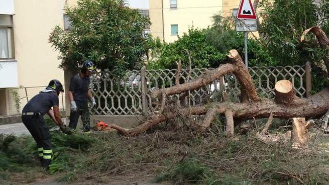 Al lavoro sull'enorme ramo di pino crollato (foto Umicini)
