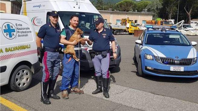 La Stradale con la cagnolina salvata
