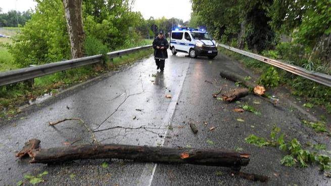 Maltempo Ravenna, violento nubifragio in Bassa Romagna: allagamenti e alberi crollati