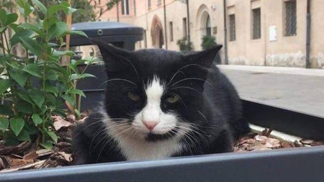 Silvestro, il gatto del comune di Nonantola morto investito