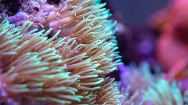 Un corallo