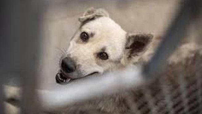 Cane migliore amico dell'uomo (Ansa)