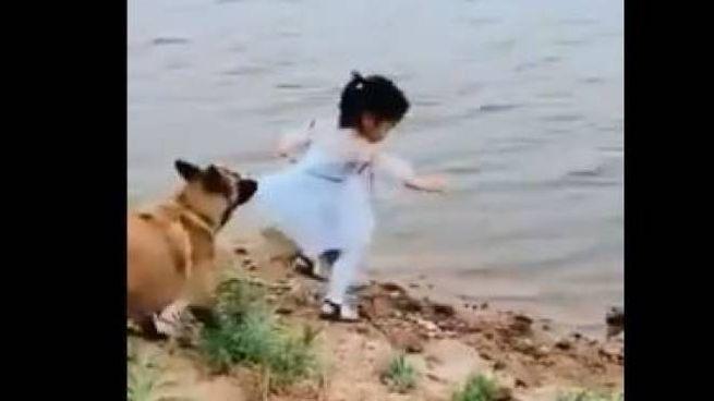 Il cane salva la bambina (twitter.com/OrgPhysics)