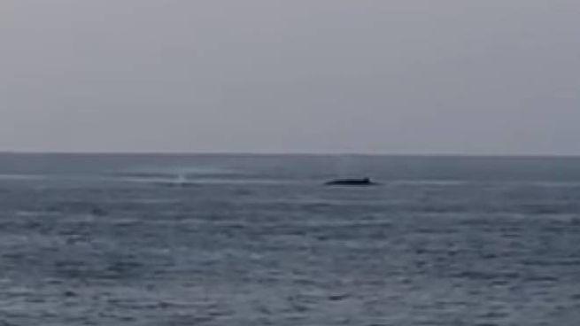 Le balene: di quella davanti si nota lo sbuffo