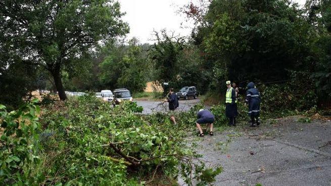 Pesaro, tanti gli alberi e i rami caduti per il maltempo (Fotoprint)