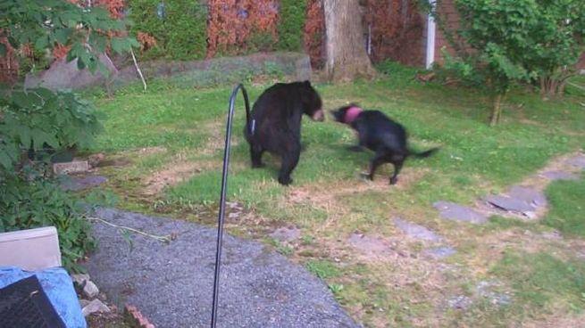 Il cane Riley mette in fuga un orso (Facebook)