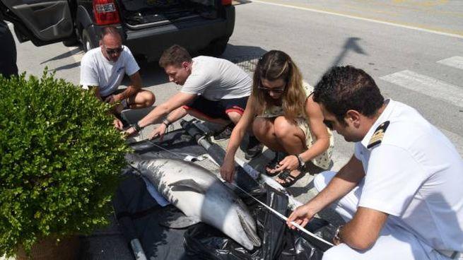 Il delfino morto a Viareggio