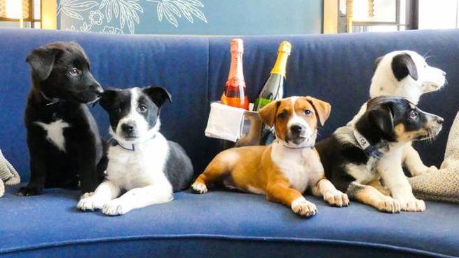 Il pacchetto cuccioli + bollicine - Foto: monaco-denver.com