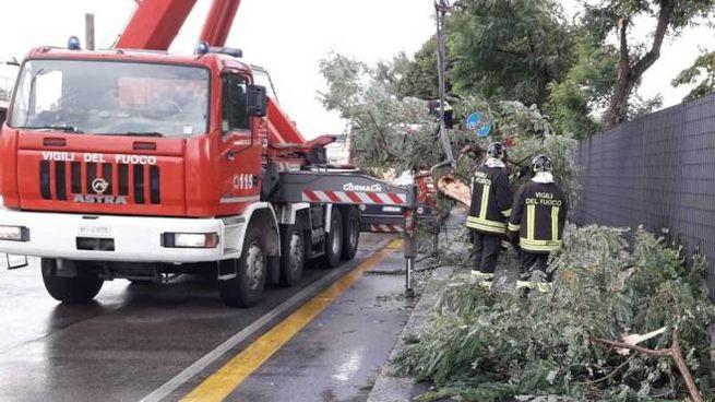 Maltempo a Bologna, alberi caduti in strada