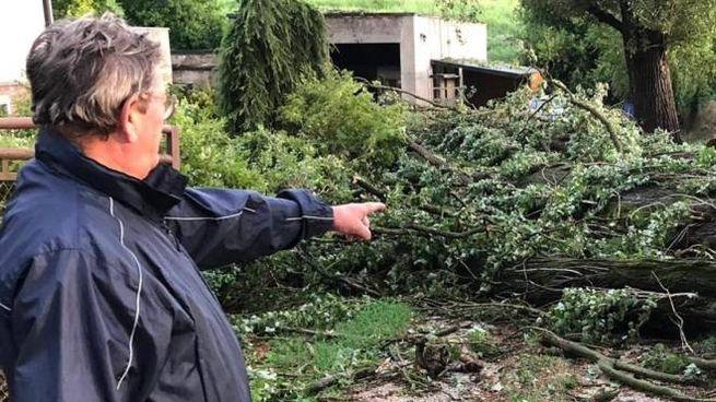 I volontari indicano le piante sradicate dal forte vento