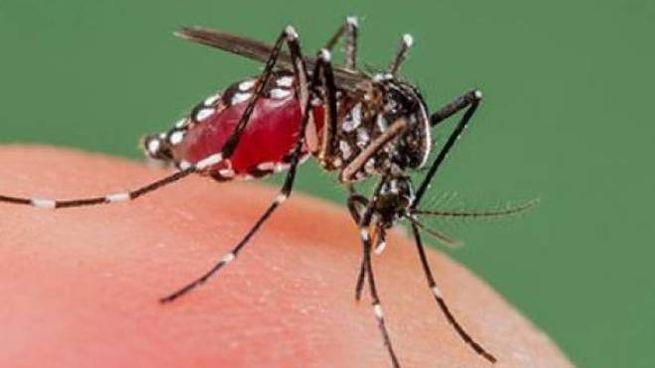 Dengue, caso sospetto a Jesi