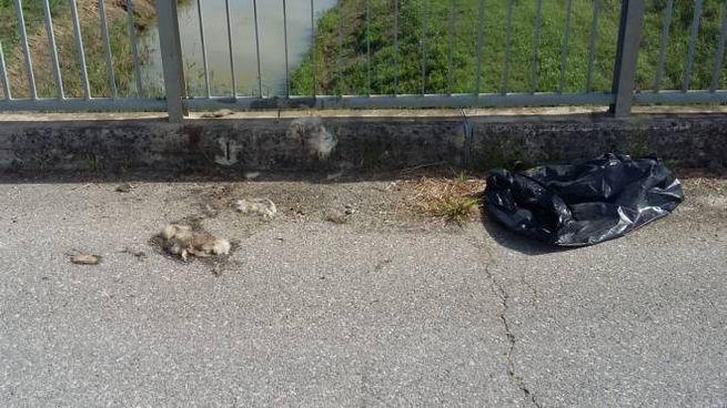 Il sacco nero e i resti di peluria trovati sul ponticello sopra la carcassa del cane